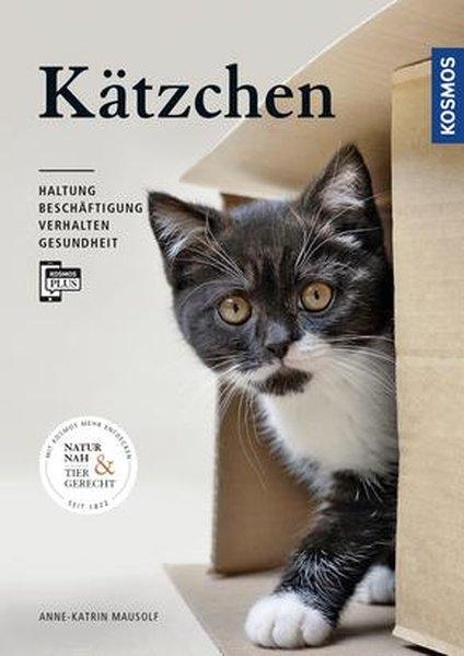 Kätzchen - Haltung, Beschäftigung, Verhalten, Gesundheit